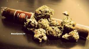 Dope, Memes, and Weed: how much weed  do you put in a blunt?  Omarijuana.tv  @dope_weed_photos