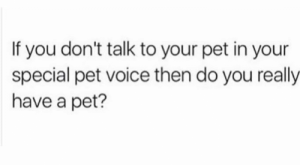 Memes, Voice, and : If you don't talk to your pet in your  special pet voice then do you really  have a pet?