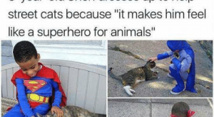 "Animals, Cats, and Superhero: Kwesha Dali  @DaliKwesha  -year-old Shon dresses up to help  street cats because ""it makes him feel  like a superhero for animals"""