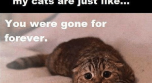 Bad, Cats, and Memes: l always feel bad when I  come home from work and  my cats are just like…  You were gone for  forever.  I counted.