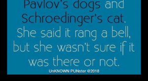 Cats, Dogs, and Memes: l asked the librarian for  a book about  Pavlov's dogs and  Schroedinger's cat.  She said it rang a bel  but she wasn't sure it it  was there or not.  UnKNOWN PUNster @ You know what's worse than raining cats and dogs? Hailing taxis. #UnKNOWN_PUNster