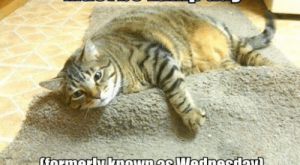 Memes, , and Com: Must be Lump day  formerly Known as Wednesdlay)  IGAN HA S CHEEZBURGER.COM 흡  e