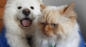 Cats, Dogs, and One: The difference between dogs and cats, in one  picture