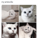 Cats, Life, and Memes: This cat's eyeliner is more fleek than  my entire life