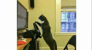 Cats, Memes, and Work: what cat's really do when you're  At work