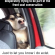 gag, Memes, and : When you're in the backseat  desperately trying to be part of the  front seat conversation Just to let you know i do exist. Follow @gag