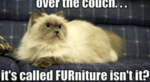 Memes, True, and Couch: yes, i knowigot hairall  over the couch.  it's called FURniture isn't it? True.
