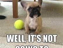 "funny dog pictures with captions – Bing Images #Dogs ""> #Dogs #memes #humor explore…"