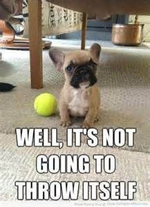 "funny dog pictures with captions – Bing Images #Dogs ""> #Dogs  explore…"