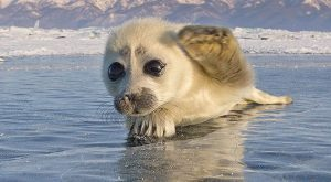 Photos Of Adorable Seal Pups to Brighten Your Day