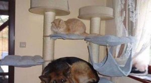 "funny-animals- funny animal pictures pictures funny Animals #funnydogs "" #funnydogs"