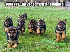 """Funny Animal Pictures Of The Day – 25 Pics #funnydogvideos explore Pinterest""""> ..."""