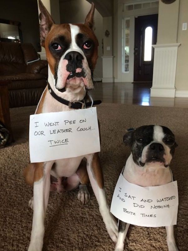 "#dogshaming ""> #dogshaming #funnydogshaming ""> #funnydogshaming"