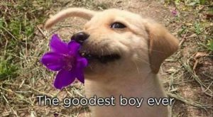 Alright I don't like the grammar here, but the cuteness of the dog made…