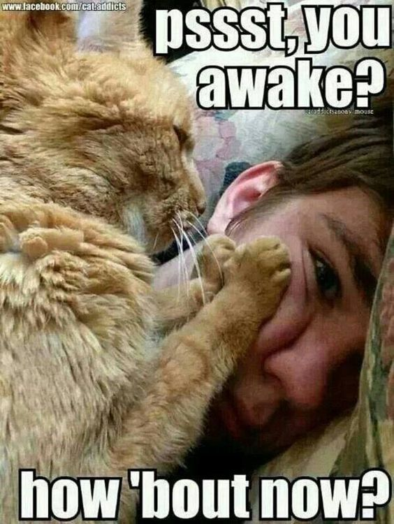 Cats Who Are Waking You Up For An Important (Memes)