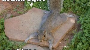 Drunk Squirrel Pics with Captions | Can Has Cheezburger? – cant – Lolcats n…...