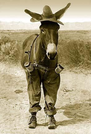 This is not a donkey. This is a mule. It bugs me when city…