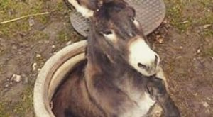 Ahhh, the poor donkey has to be in this funny joke! Repinned for you…