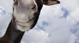 Love the faces donkeys make best animals ever