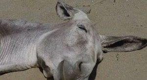 Funny-Donkey-Pictures-with-Captions-6