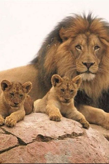 young wild animals | uldissprogis | Page