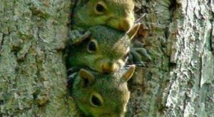 Funny-Squirrels-with-Caption- –