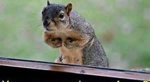 Funny Squirrel Pictures With Captions Images Wild Animals