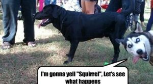 squirrels with captions – Google Search (photo bomb Derp HUSKY!!࿯&#x;)