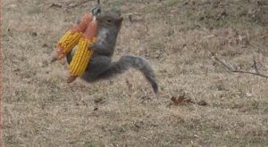 squirrels | Monday Morning Funny & #; Squirrels | Bytes From Babylon