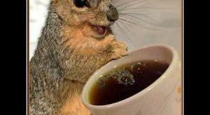 funny squirrel pictures with captions dance | funny-pictures-squirrels-have-discovered-coffee