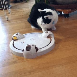 Automatic Cat Entertainment System