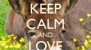 KEEP CALM AND LOVE DONKEYS – by me JMK