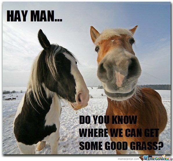 """captions memes 
