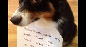 Funny Dog Shaming