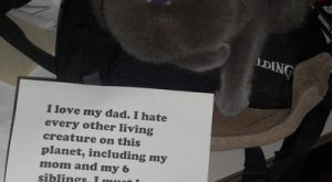 Cat-Shaming. @Claudia Sanchez. It is stinky, he only loves his dad!
