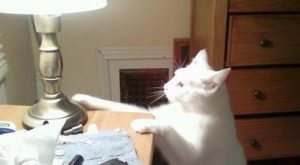 Good reminder! NEVER get a touch lamp! My cats would totally do this!