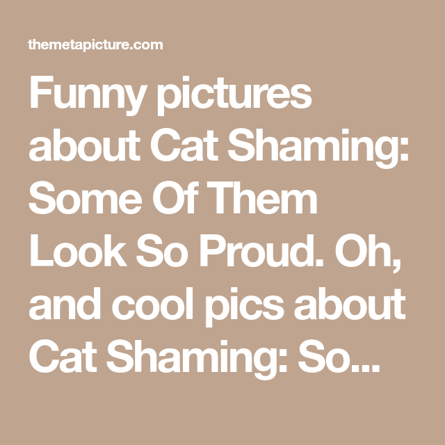 Funny pictures about Cat Shaming: Some Of Them Look So Proud. Oh, and cool…