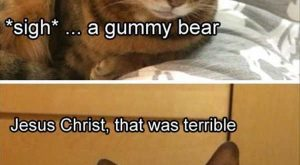 Cat, Kitten, Joke, Image, Humour, Sadness Meme: SO What do you call a bear…