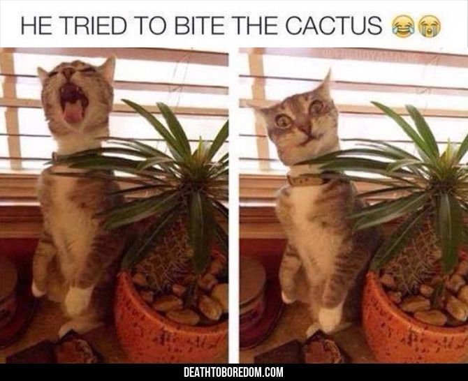 Funny Animal Pictures Of The Day – 23 images
