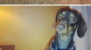 Funny Dog Shaming – notice how you never see any cat This is clearly…