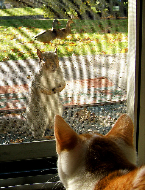 **Excuse me, the ducks and I were wondering why breakfast was late this