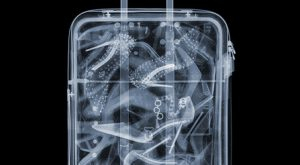 Nick Veasey, 'Shoes in Suitcase,' 2015, Bluerider ARTMore Pins Like This One A...