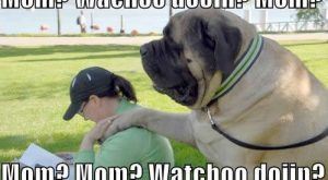 Silly Pictures with Captions | funny dog sayings, lol puppy, funny dog pictures with…