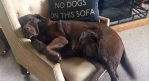 """Funny Animal Pictures Of The Day 25 Pics #funnydogquotes explore Pinterest""""> #fun..."""