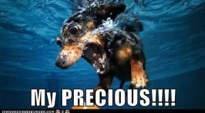 Funny Dachshund Pictures with Captions | … dachshund – Page  – Loldogs n…