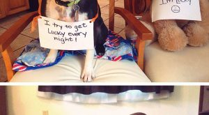 Meet the Naughtiest Dogs of