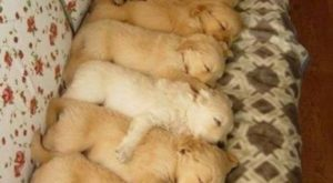 "Aww! Look at all the little puppies! – #puppies search Pinterest""> #puppies #dogs search…"