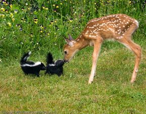 "skunks & bambi #Animals ""> #Animals #cats ""> #cats #cute "">…"