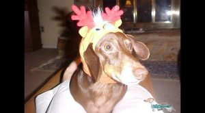 Funny Dachshund Pictures with Captions