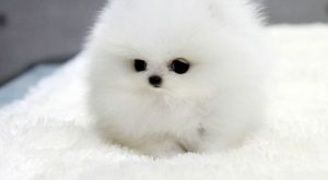 Is that really a puppy? Looks like a cute baby seal. | Awesomelycute -…